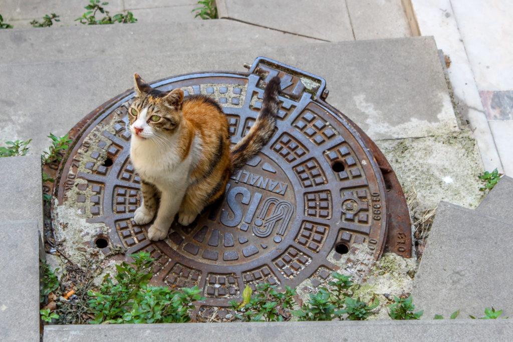 Cat in Istanbul