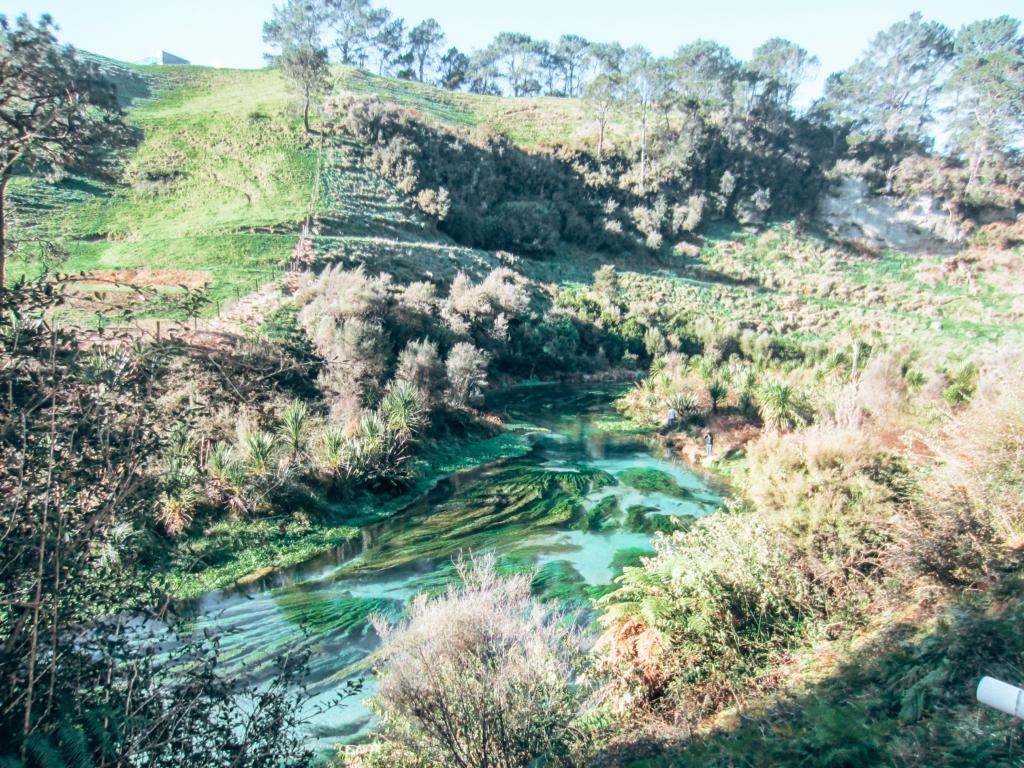 Blue Spring, NZ